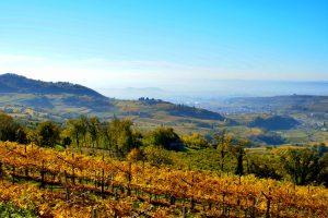 Amarone wine 2013 preview Valpolicella