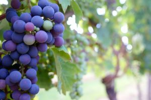 Natural Wine Red Grapes