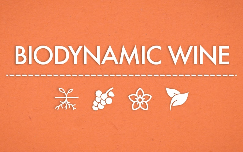 Biodynamic Wine: how to realize it and a bit of history