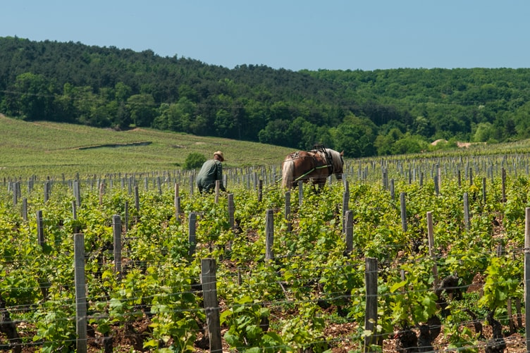 Biodynamic Wine Horse Vineyards