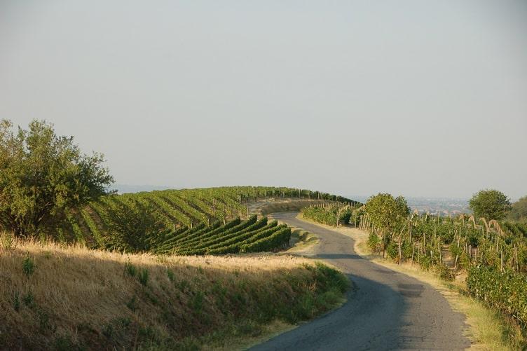 Brachetto d'Acqui Vineyards