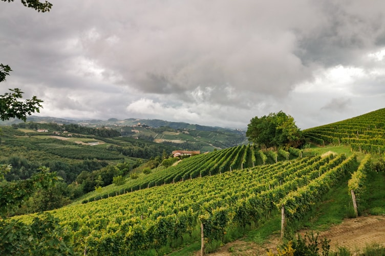 Dolcetto Vineyards Langhe