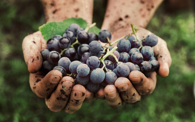 winerylovers-blog