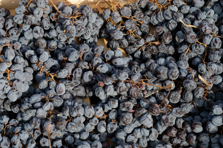 Amarone wine 2013 preview Grape