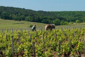 Biodynamic Wine Horse Vineyards
