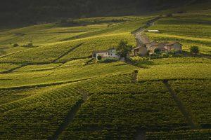 Grand Wine Tour Cerequio