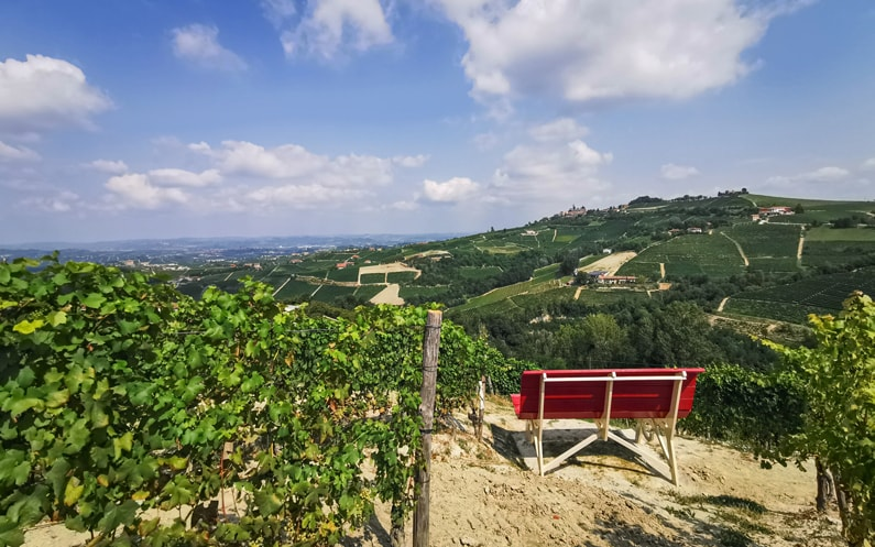 Dolcetto Big Bench Vineyards Langhe