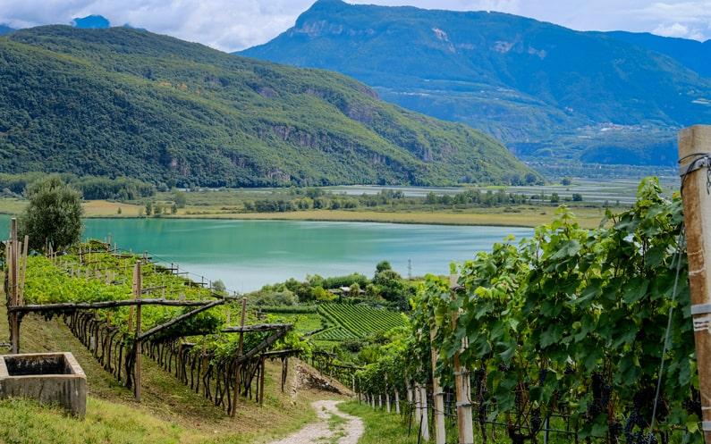 Alto Adige Wine Caldaro Kalterersee