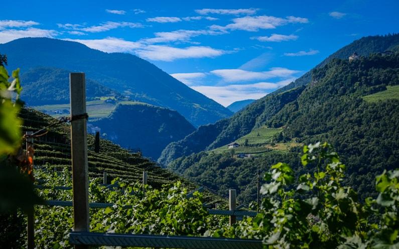 Alto Adige Wine Altitude