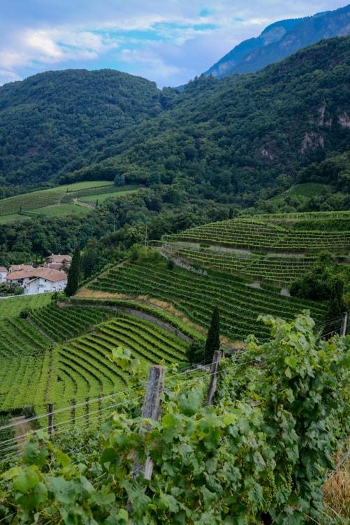 Alto Adige Wine Altitude High Vineyards