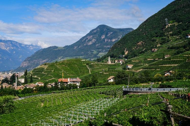 Alto Adige Wine Altitude Santa Maddalena