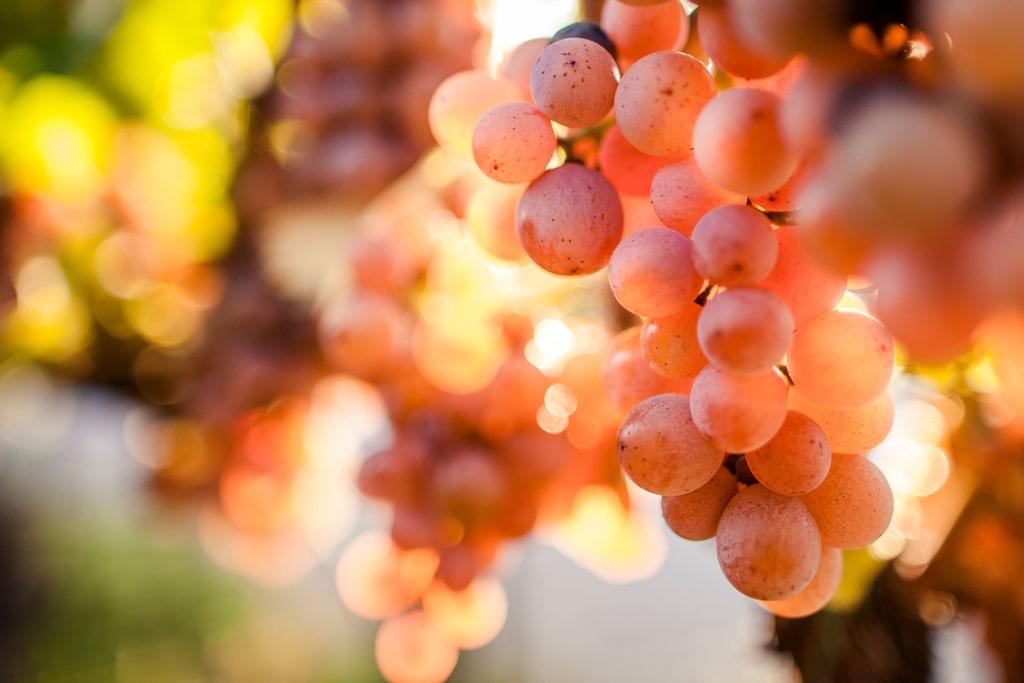 Gewurztraminer Alto Adige Grape