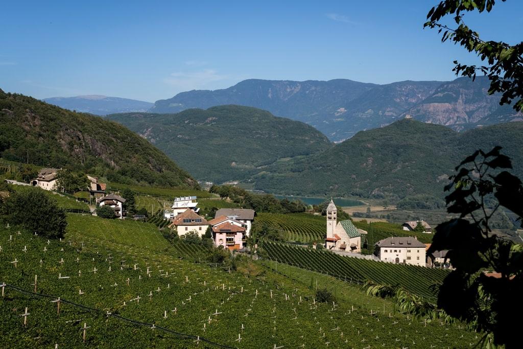 Gewurztraminer Alto Adige Vineyards